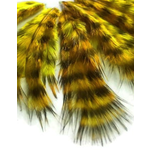 Shor Genetic Rooster Mini Pack. Hooks 2-6 Grizzly Yellow