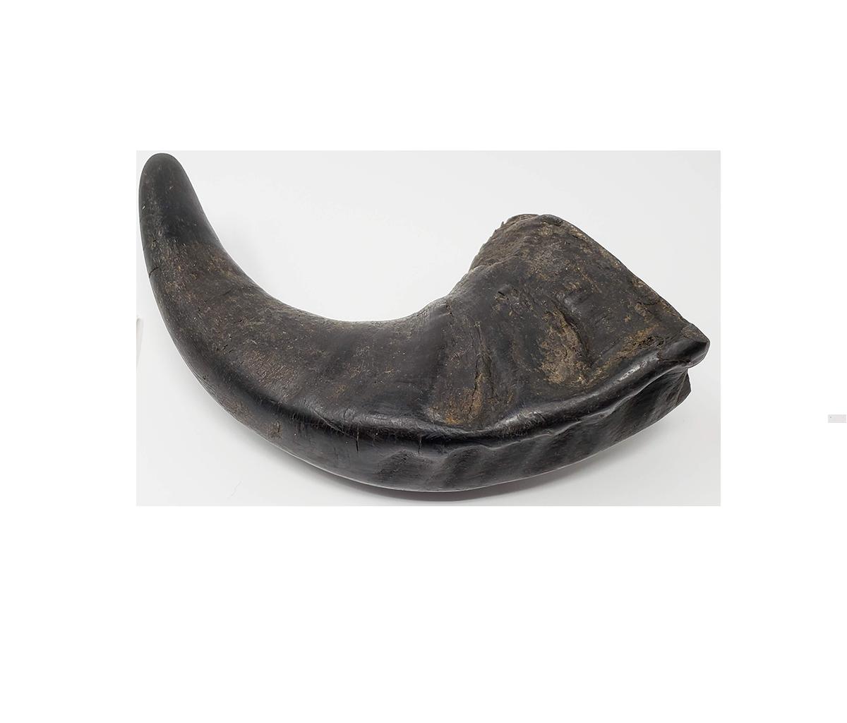 Open Range Open Range Water Buffalo Horn