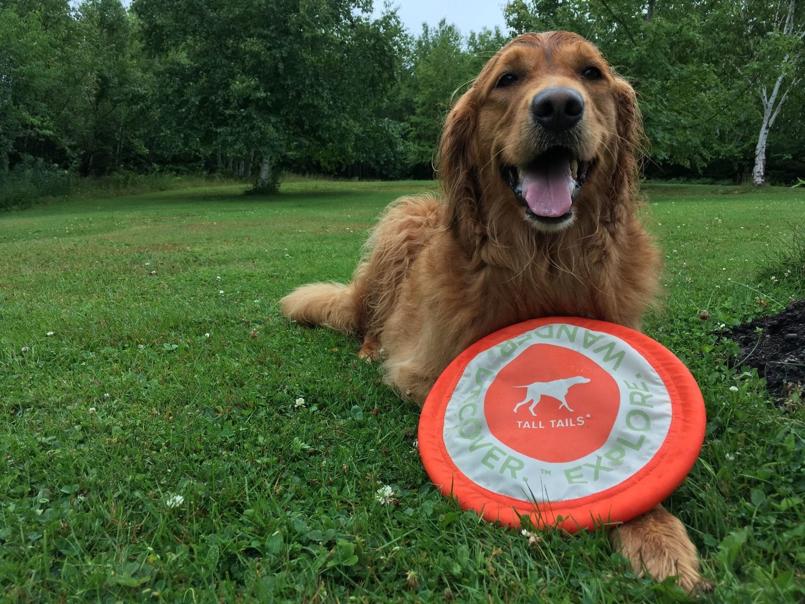 """Tall Tails Tall Tails - Flying Disc Orange 7"""""""