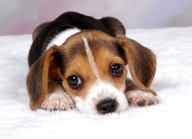 Puppy School & Training Classes