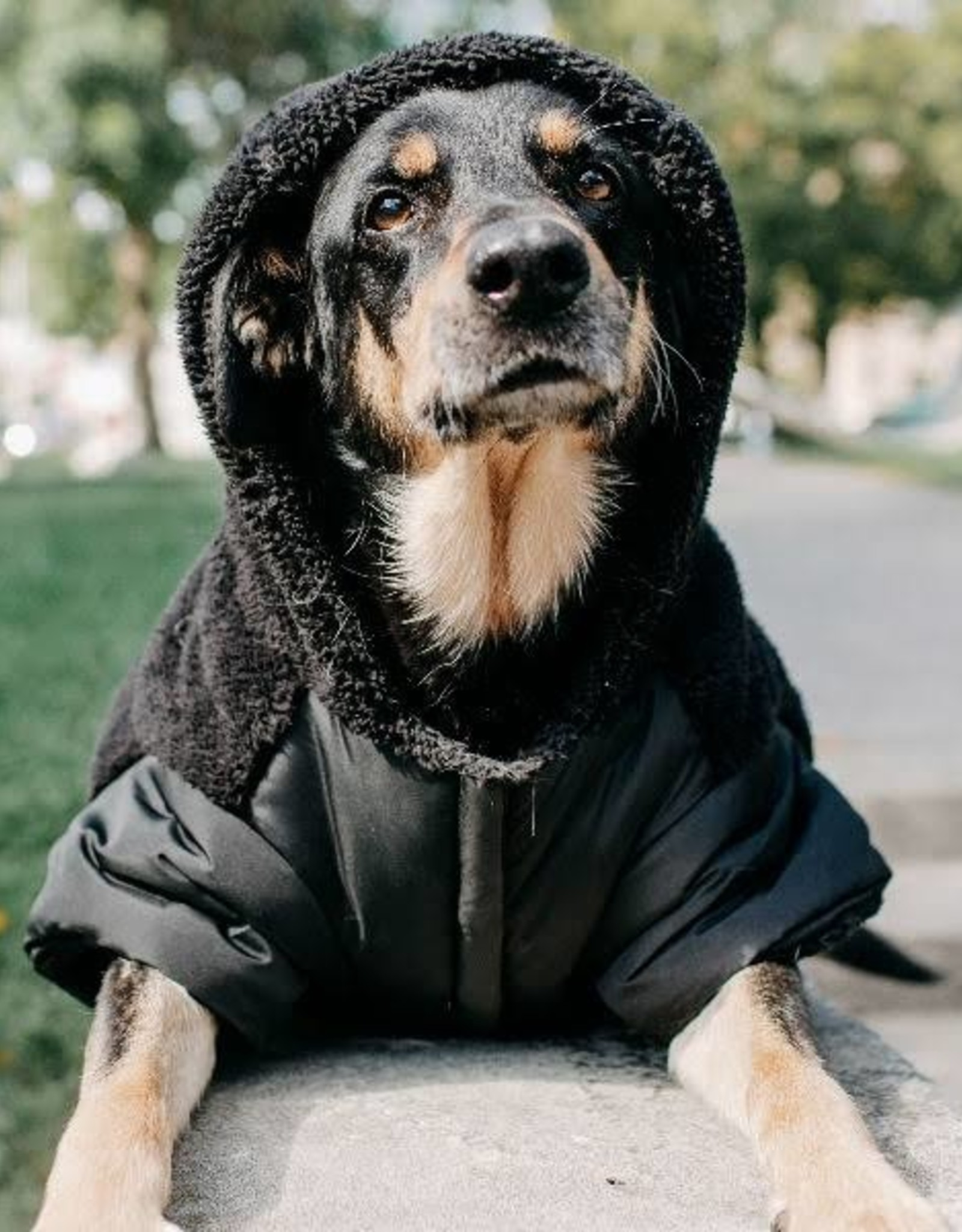 Silver Paw Silver Paw - Quilted Jacket Hoodie Black L