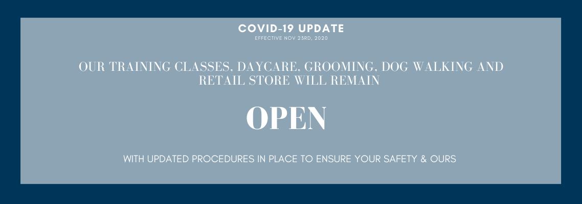 Dog Lounge COVID-19 Update