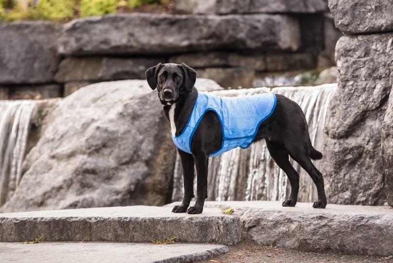 GF PET Ice Vest Blue