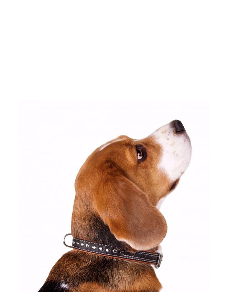 Collar Collar Soft Studded Leather Collar