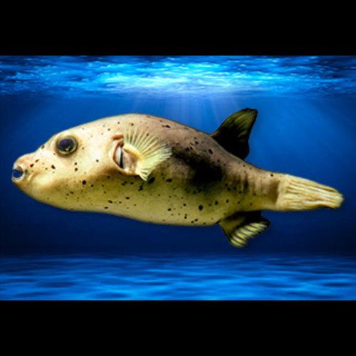 Exotic & Rare Fish