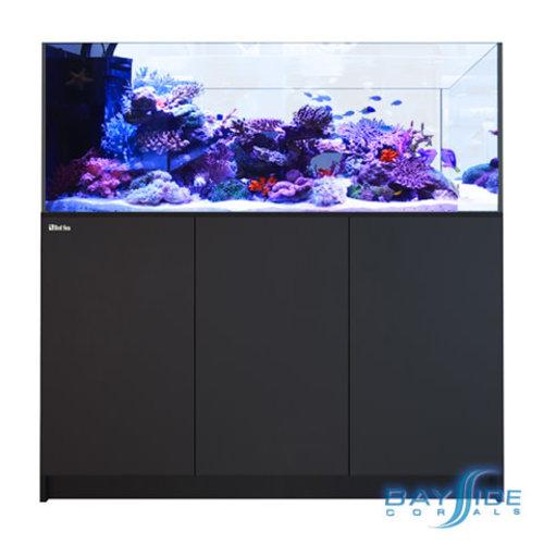 Red Sea Peninsula 650 | Black