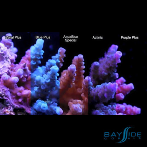 ATI ATI T5 Bulb 24W Coral Plus