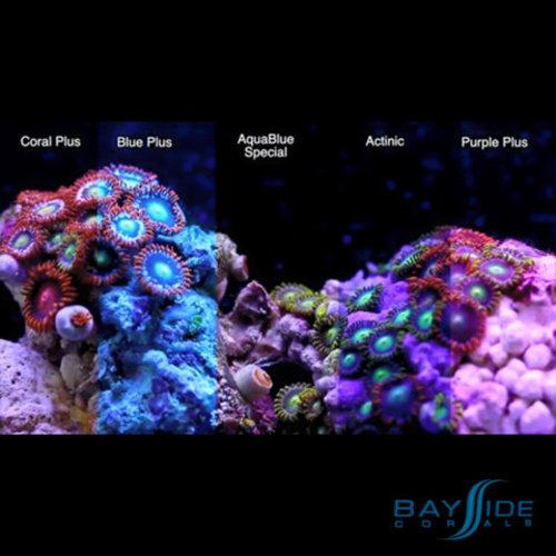 ATI ATI T5 Bulb 80W Purple Plus