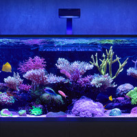 Red Sea Introduces New REEFER-S Tanks