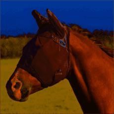 Cashel Fly Mask Standard w/Ears