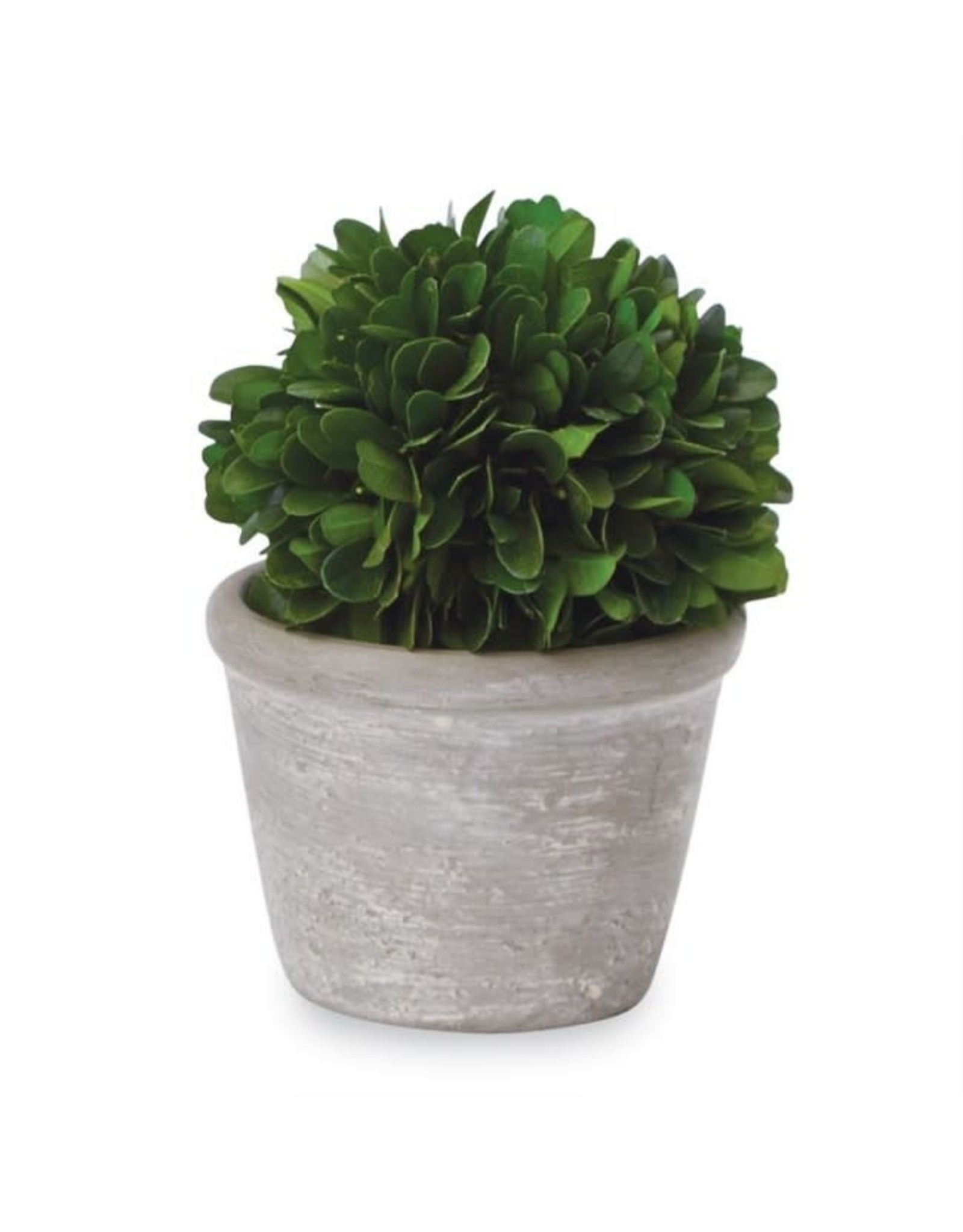 SHORT BOXWOOD BALL IN POT