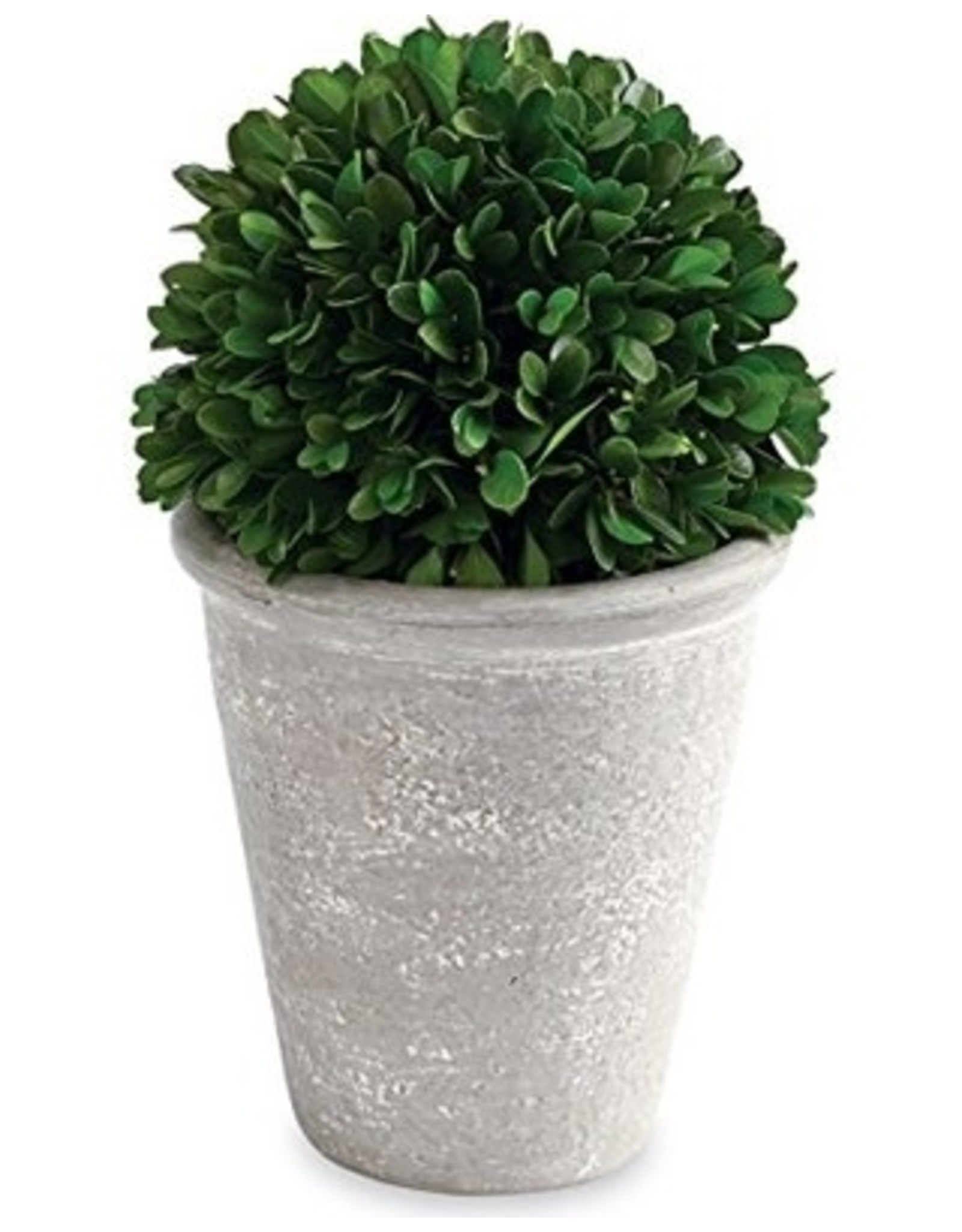 TALL BOXWOOD BALL IN POT