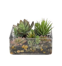 Square Glass Succulents