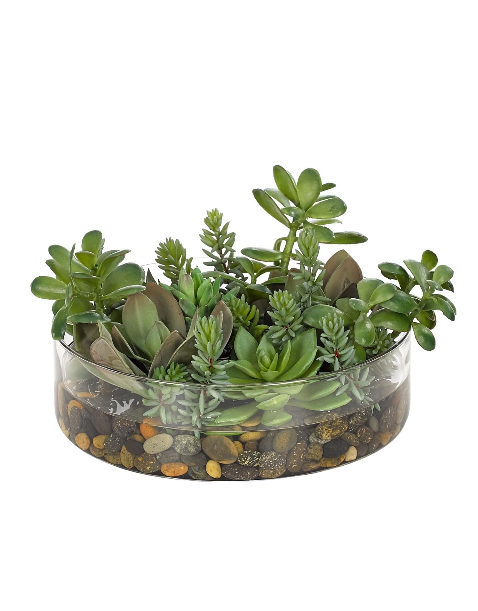 Large Round Succulent