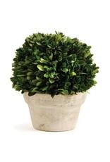 Oak + Arrow Interiors Round Topiary