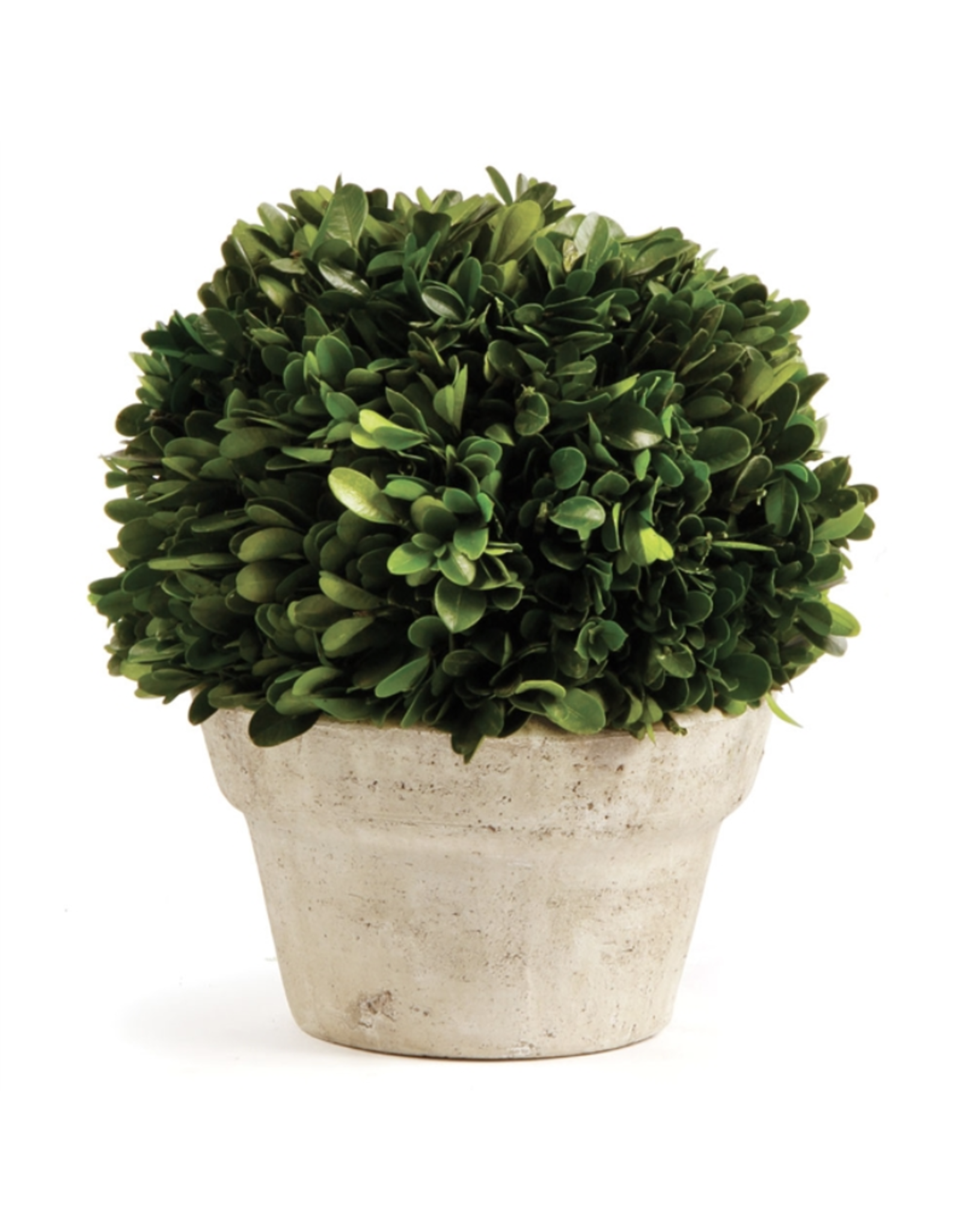 Boxwood Topiary in Medium Pot