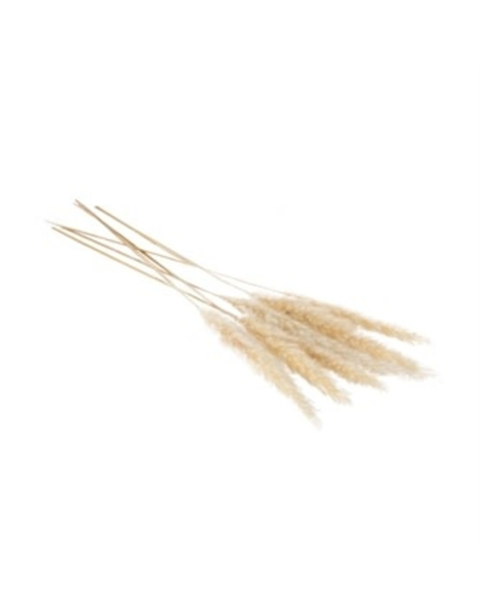 Oak + Arrow Interiors Pampas Grass Pack of 6