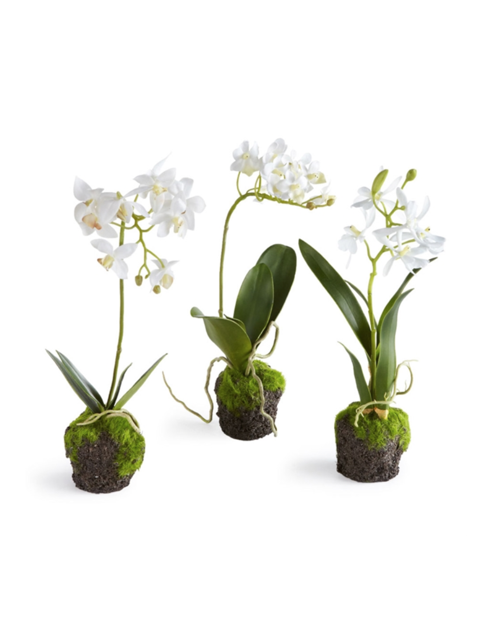 Oak + Arrow Interiors Dendrobium Drop-In 12""