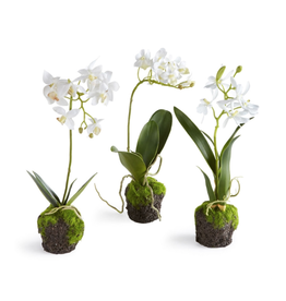 """Oak + Arrow Interiors Orchid Drop-In 12"""""""