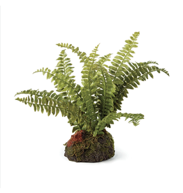 Oak + Arrow Interiors Boston Fern Drop-In 7""