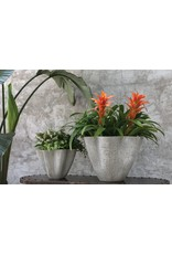 "Oak + Arrow Interiors Living Planter - Small 13"" x 13"" x 9"""