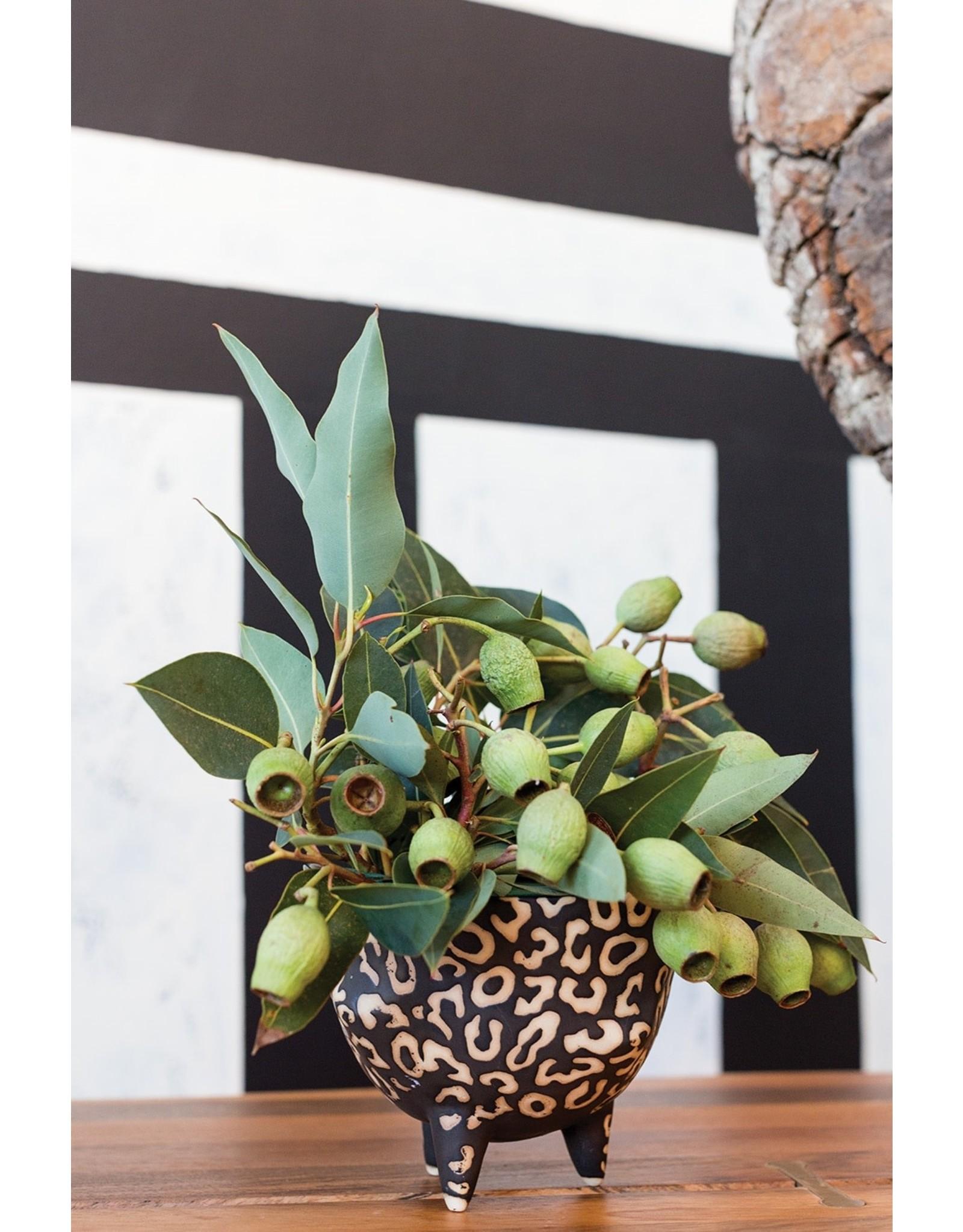 Oak + Arrow Interiors Leesi Pot