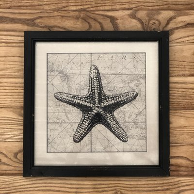 Framed Nautical Picture-Star Fish