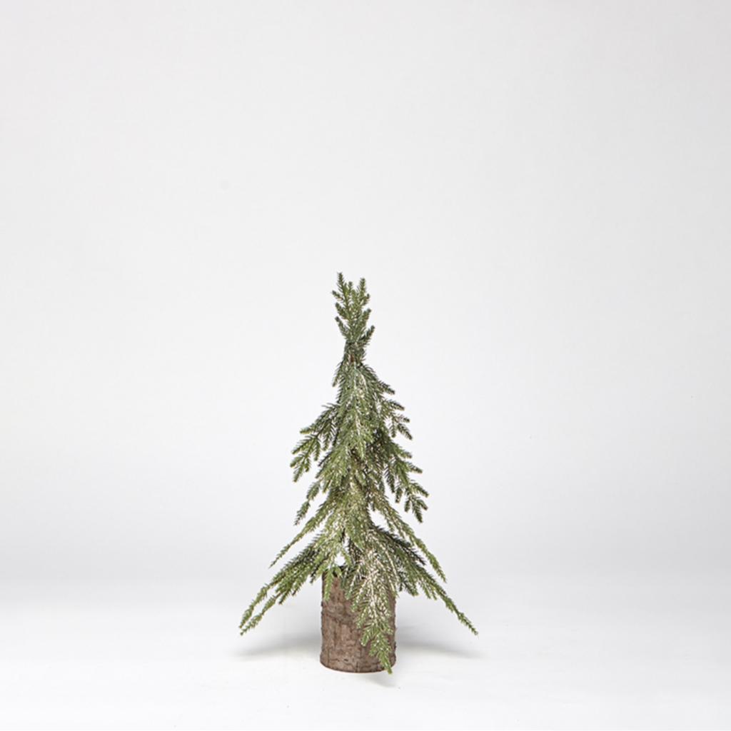 Small Golden Pine Tree