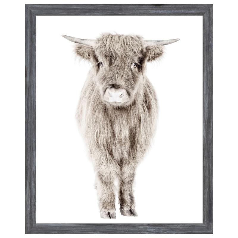 Highland Calf Framed Print