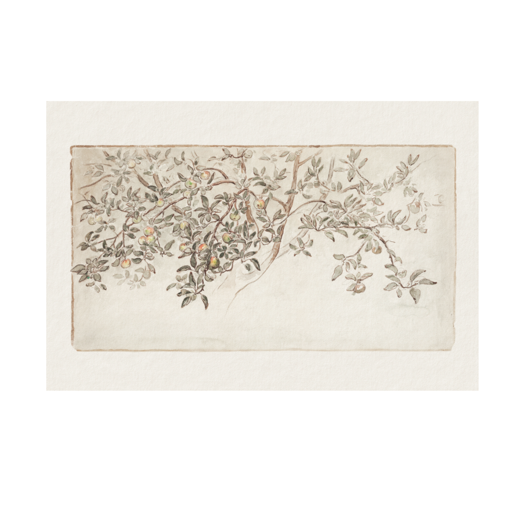 Framed Bordered Apple Tree Sketch