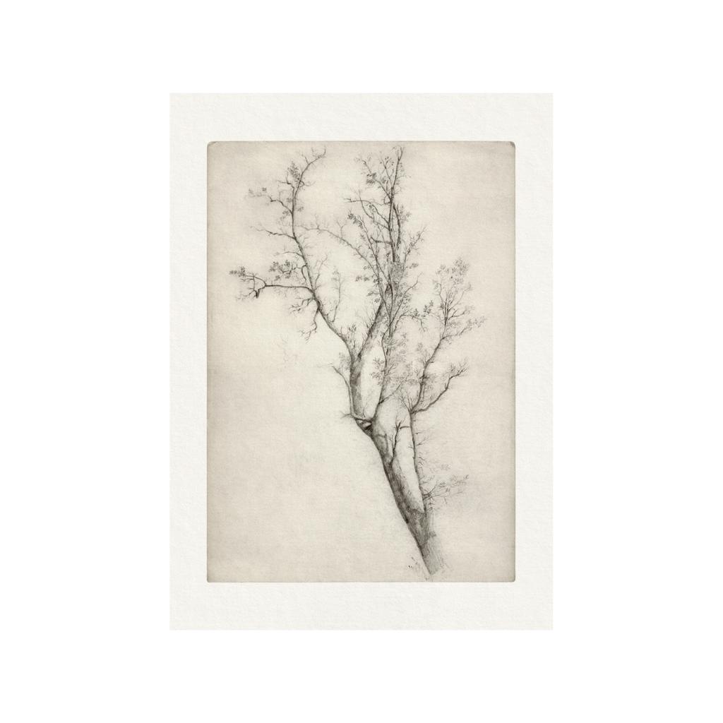 Framed Bordered Branch Etching