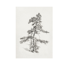 Framed Pine Tree Sketch