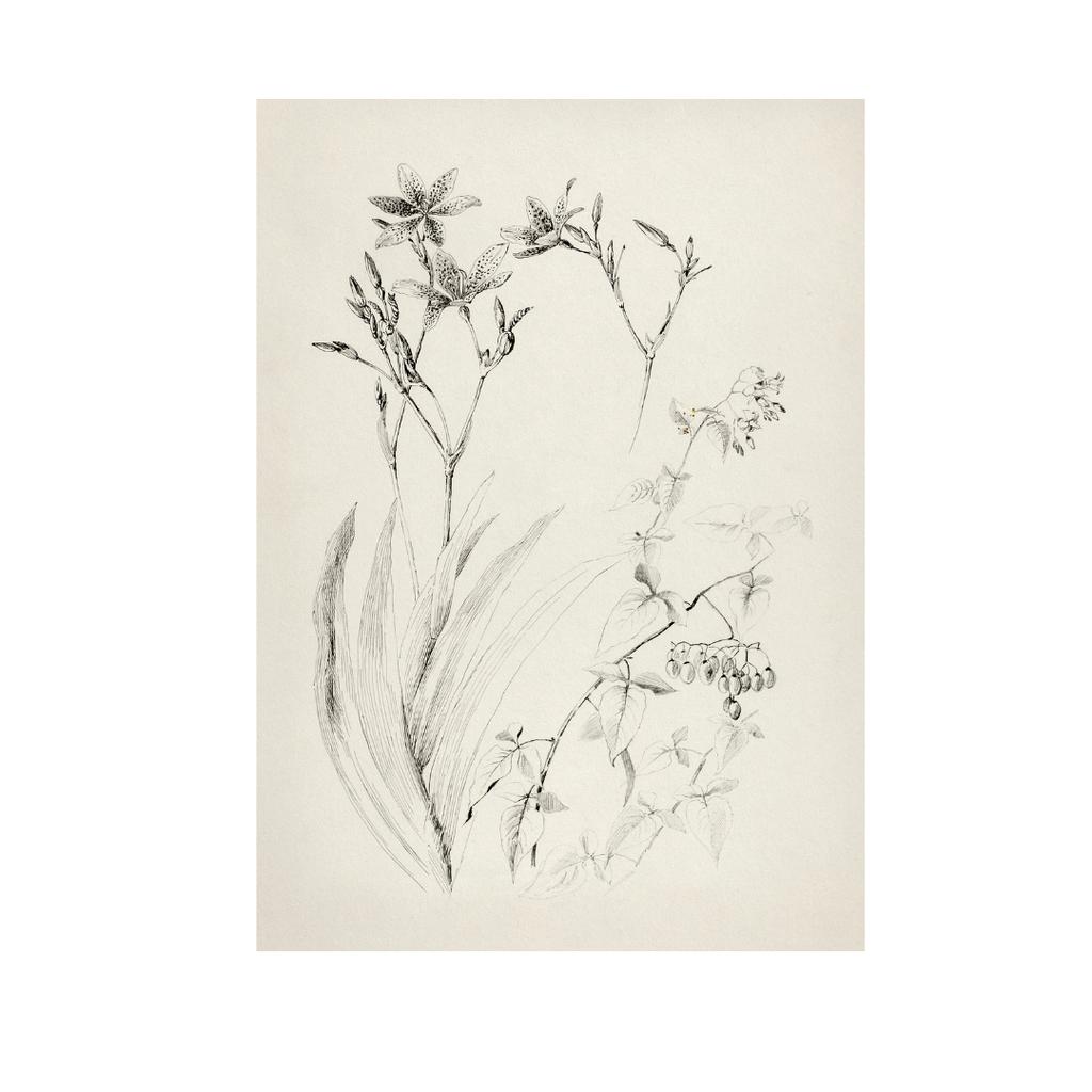 Framed Rustic Flower Sketch