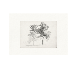Framed Two Trees Drawing