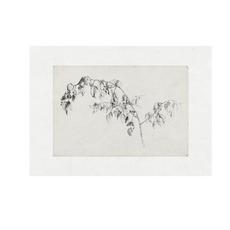 Framed Vine Sketch