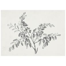 Framed Blossom Branch Print