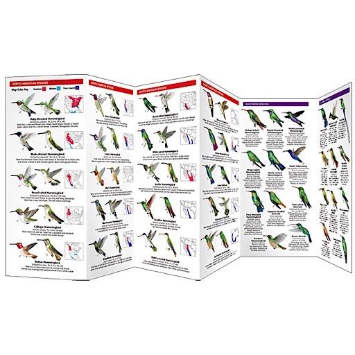 A Pocket Naturalist Guide - Hummingbirds