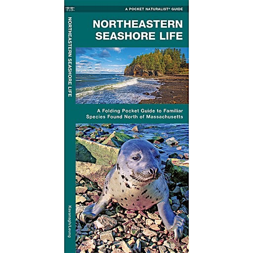 Waterford Press A Pocket Naturalist Guide - Northeastern Seashore Life