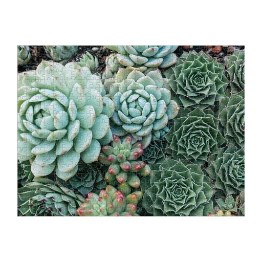 Succulent Garden Jigsaw Puzzle - Double Sided - 500 Pieces