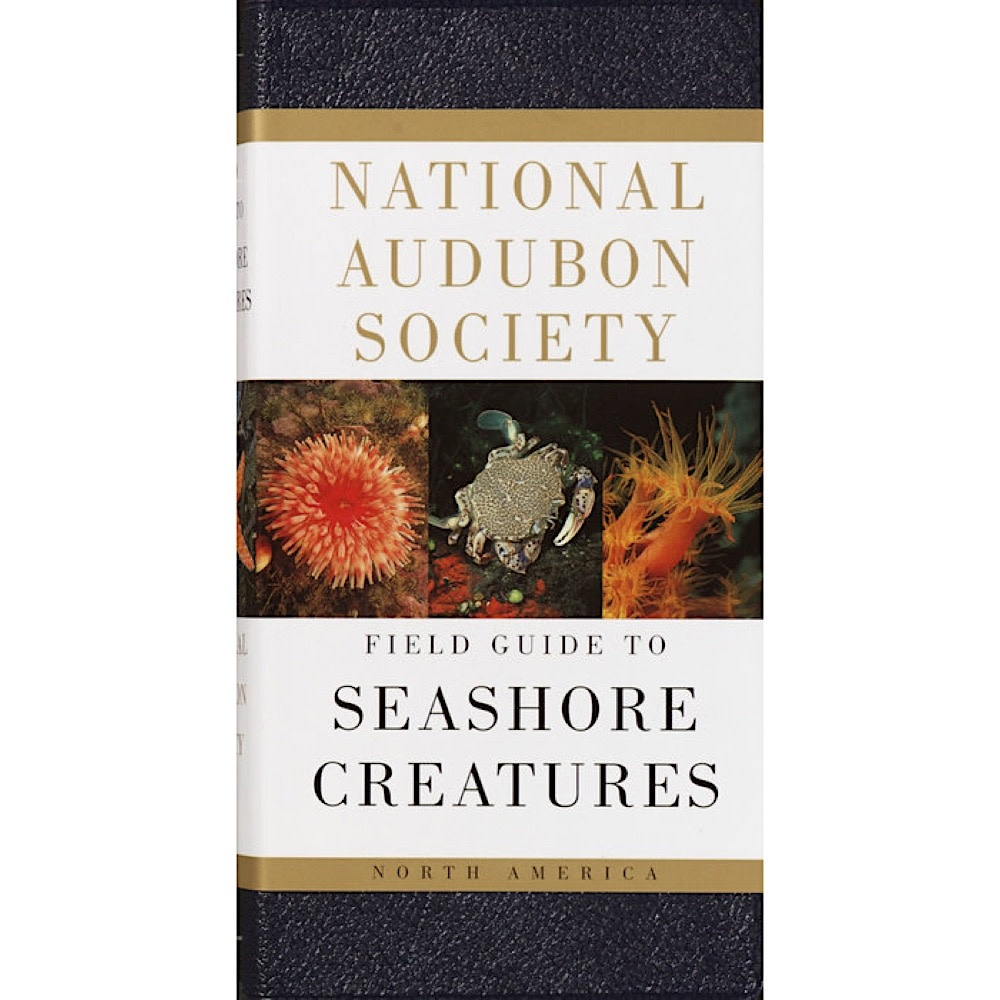 National Audubon Society's Field Guide To Seashore Creatures
