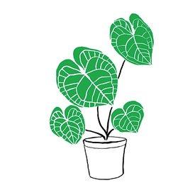 Tattly Tattly Tattoo 2-Pack - Calathea Plant