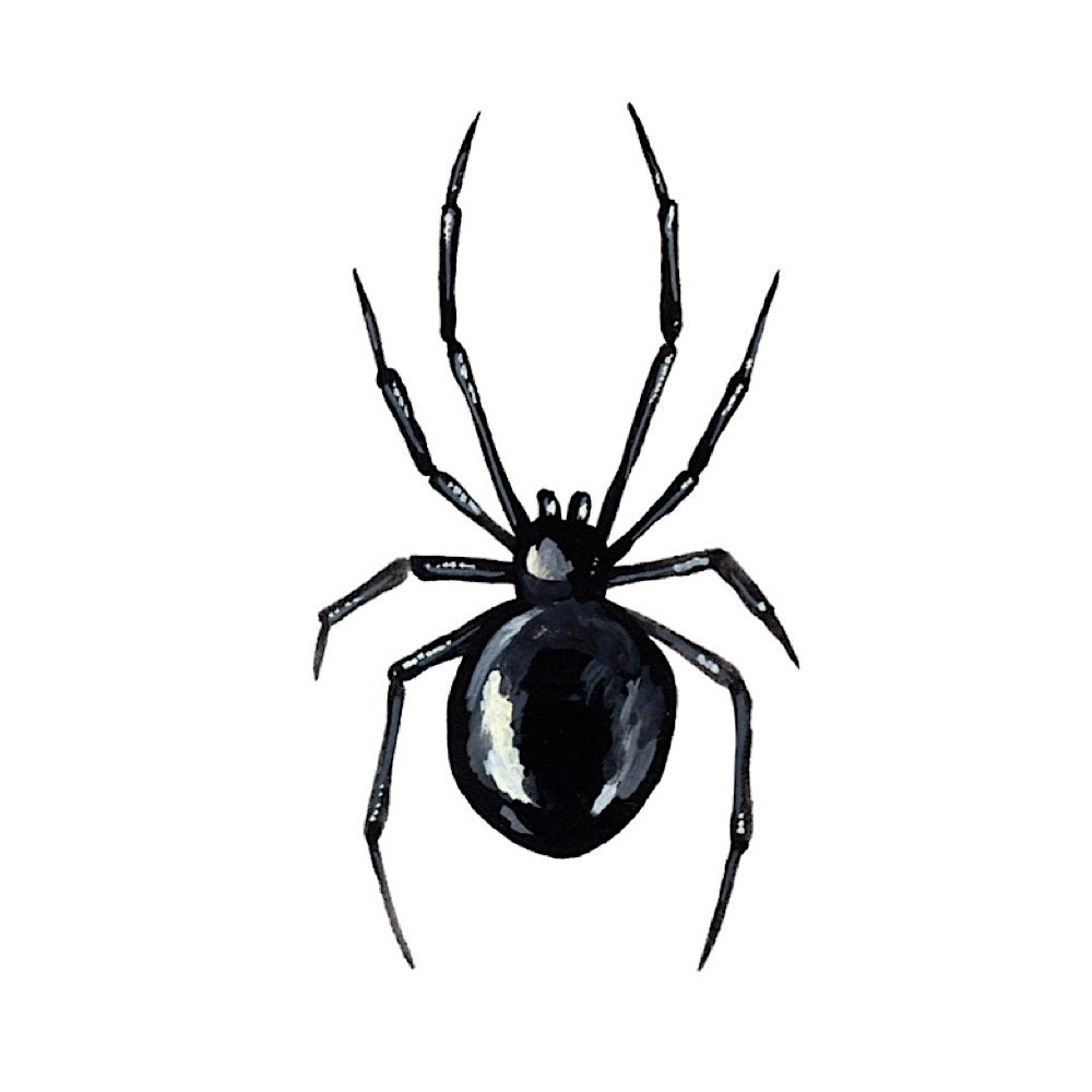 Tattly Tattoo 2-Pack - Black Widow