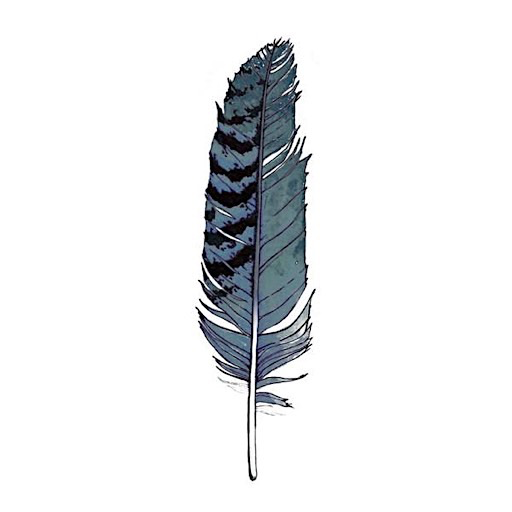 Tattly Tattoo 2-Pack - Blue Jay Feather
