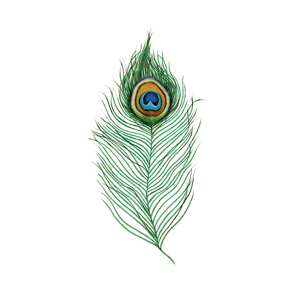 Tattly Tattoo 2-Pack - Peacock Feather