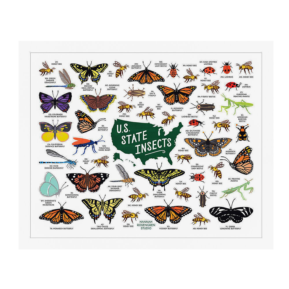 Hannah Rosengren Print - US State Insects - 16x20