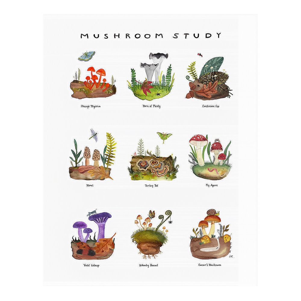 Little Truths Mushroom Study Print - 8.5x11