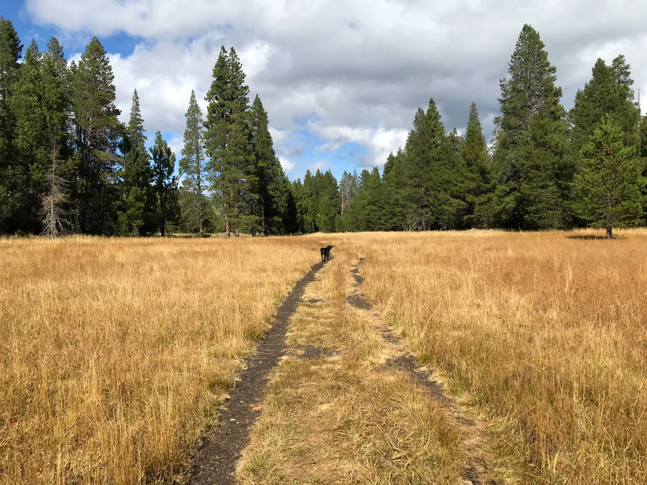 Sagehen Trail