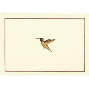 NOTE CARDS - HUMMINGBIRD FLIGHT by Peter Pauper Press