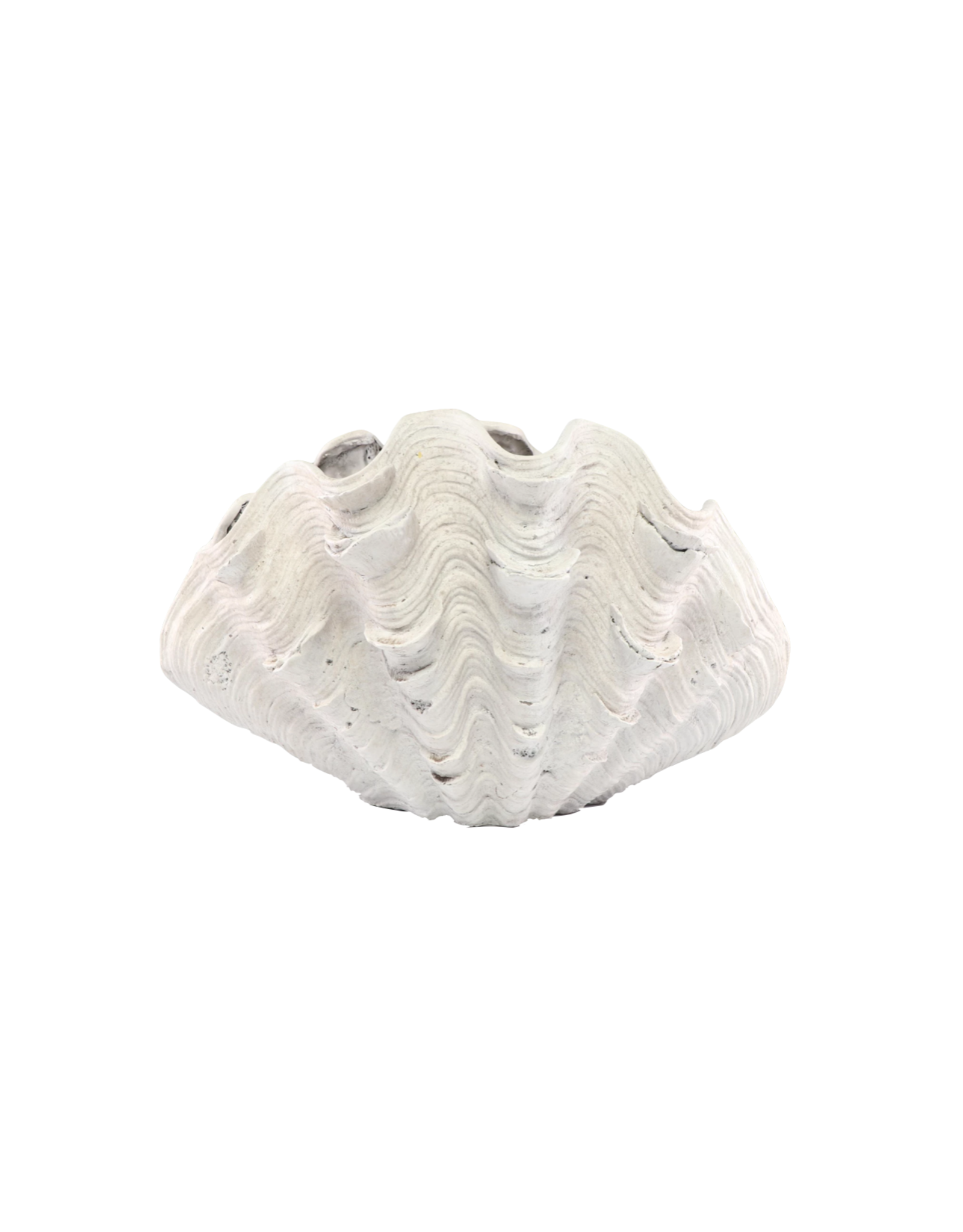 Contemporary Plaster Clam Shaped Planter
