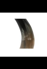 Baby Horn